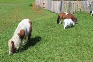 k-pony